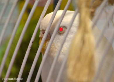 evil bird